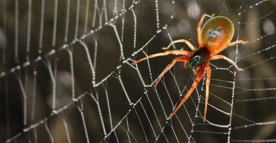 Zararlılar - Spiders