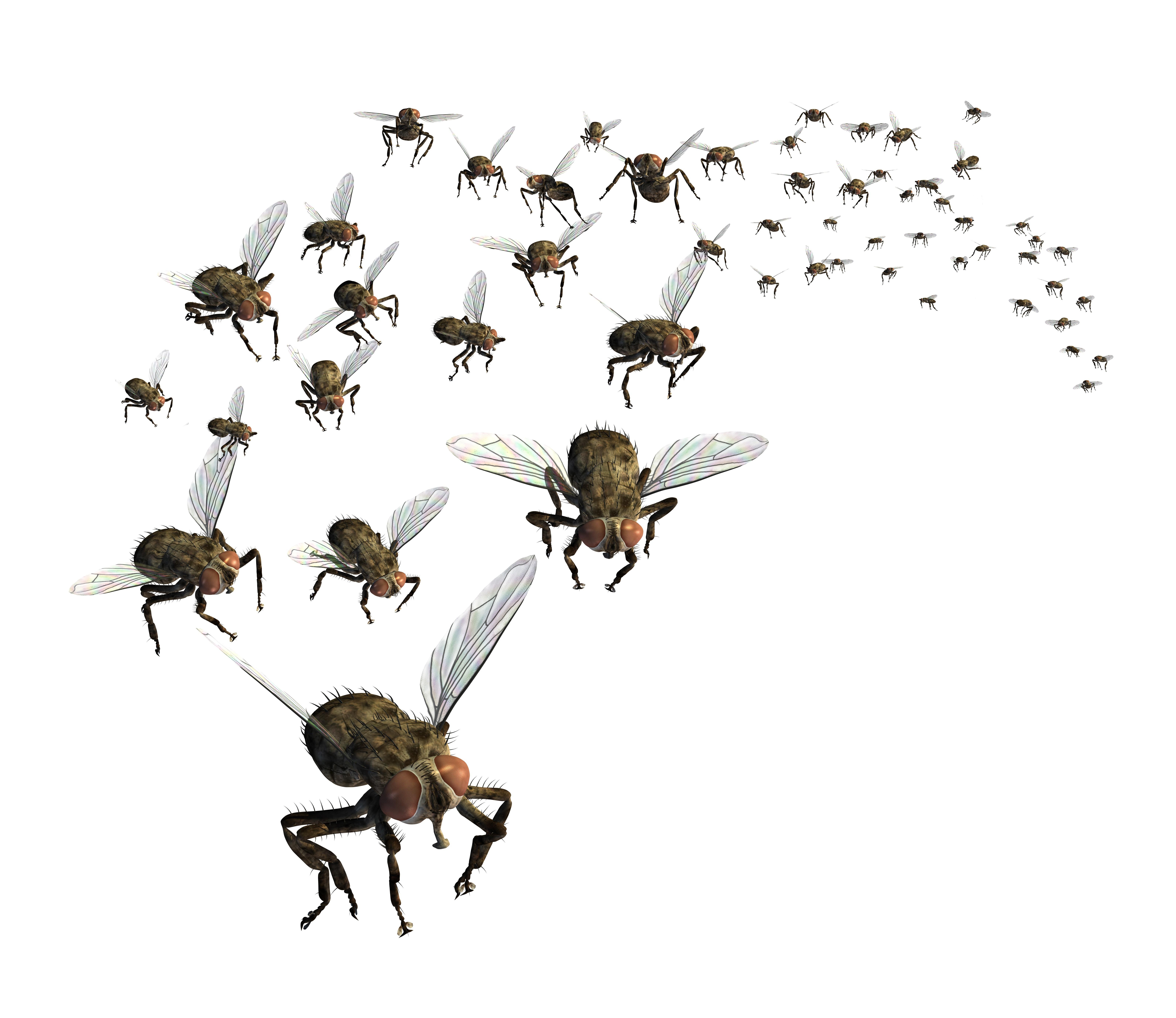 Zararlılar - Flies